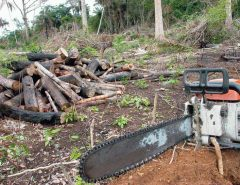 Desmatamento na Amazônia é comandado por redes criminosas, diz ONG