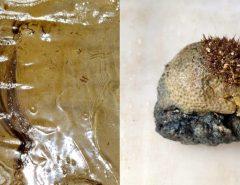 Pesquisadores identificam óleo em corais e sedimentos marítimos
