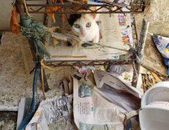 Polícia Civil apreende 48 gatos vítimas de maus-tratos em Natal