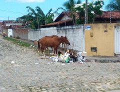 Moradores reclamam do perigo de animais soltos nas ruas de Macaíba