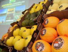 Brasil fecha acordo e melão produzido no Rio Grande do Norte pode ser exportado para a China