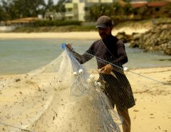 Óleos nas praias: Estudo da UFRN aponta que consumo do pescado é seguro