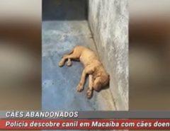 Polícia descobre canil em Macaíba com cães doentes