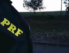 Veículo de luxo furtado em Recife/PE é recuperado pela PRF em Macaíba
