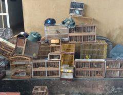 Oitenta e três pássaros silvestres de diversas espécies são apreendidos na feira do Carrasco em Natal