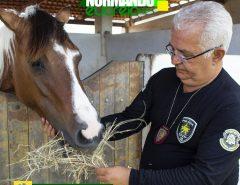 Delegado Normando Feitosa chama atenção para a questão de animais abandonados nas ruas de Macaíba