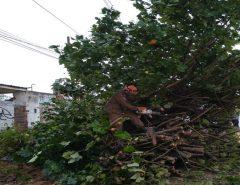 Corpo de Bombeiros orienta sobre quedas de árvores durante o período chuvoso