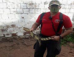 Bombeiros resgatam filhote de jacaré em São Gonçalo do Amarante