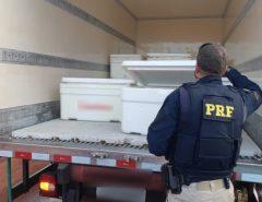 PRF apreende mais de uma tonelada de lagosta sem documentação fiscal em Touros/RN