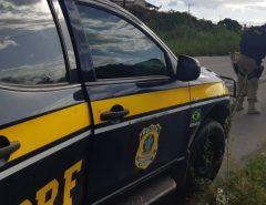 PRF flagra 38 pessoas conduzindo motocicletas sem habilitação no interior do estado