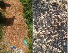 Escola Agrícola da UFRN desenvolve projeto que promove a utilização sustentável de resíduos de camarão em Pajuçara