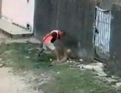 Homem que matou cachorro a facadas em Natal é preso