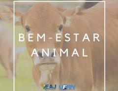 Projeto de extensão da EAJ leva capacitação sobre bem-estar animal a professores do ensino básico