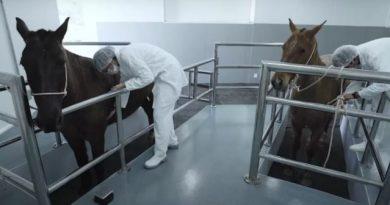Butantan inicia testes de soro anticovid em humanos ainda neste mês