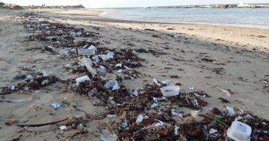 RN recolheu quase 50 toneladas de lixo em praias de 7 municípios